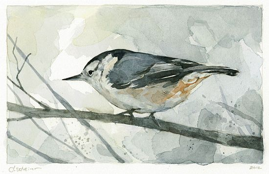 Nuthatch - Bird Watercolor Limited Edition Print by David Scheirer
