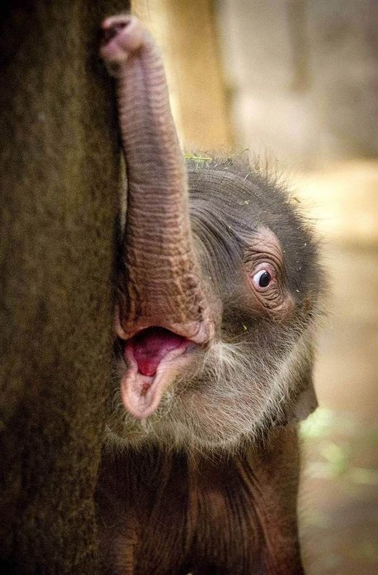 Too cute :) Animals - Elephant - Cute
