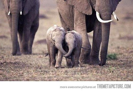 Baby elephant love