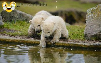 baby animals - OhEmGee baby animals (21 photos) :polar bear #fuzzy #baby #animal #cute #adorable #amusing #pictures #joke #funny - Funomenia