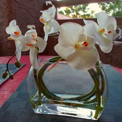 Orchid Flower Arrangement - M Burgess