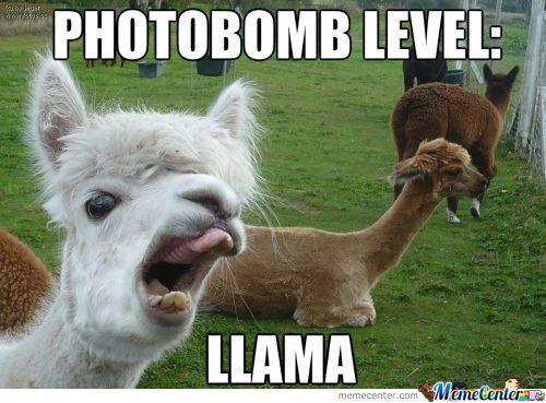 Gallery: 30 funny photos