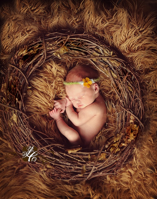 Nest newborn