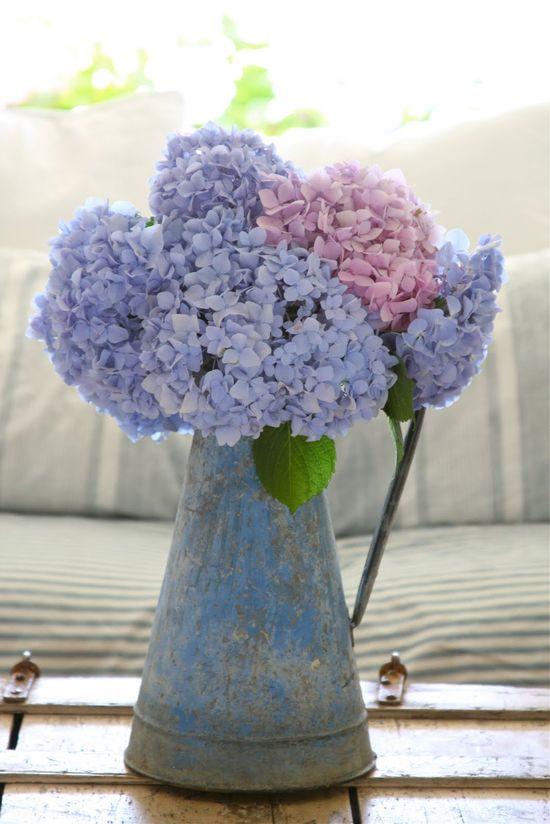 Hydrangeas -old blue pitcher