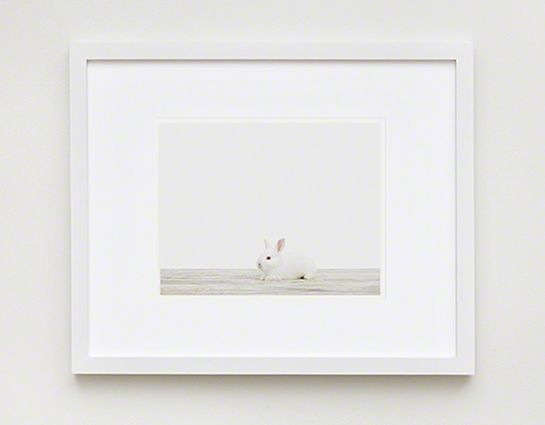 Baby Bunny No. 2