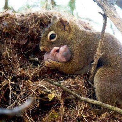 Squirrel mother holding her baby.