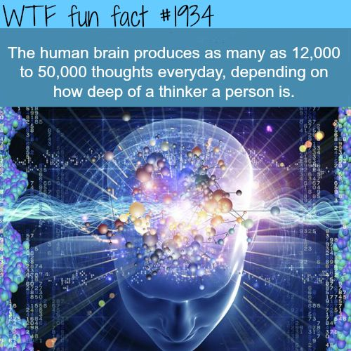 The human brain facts  - WTF fun facts