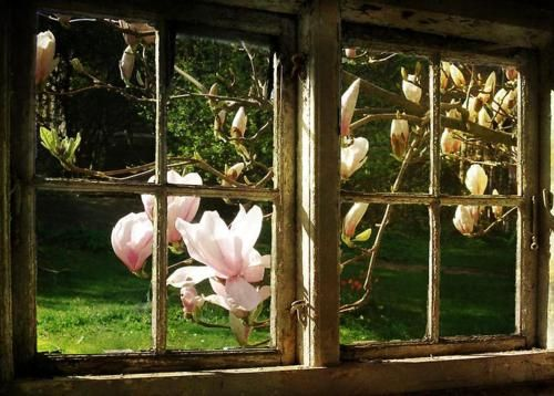 Lovely window view