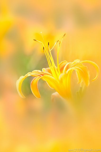 ? Bokeh photography flowers yellow