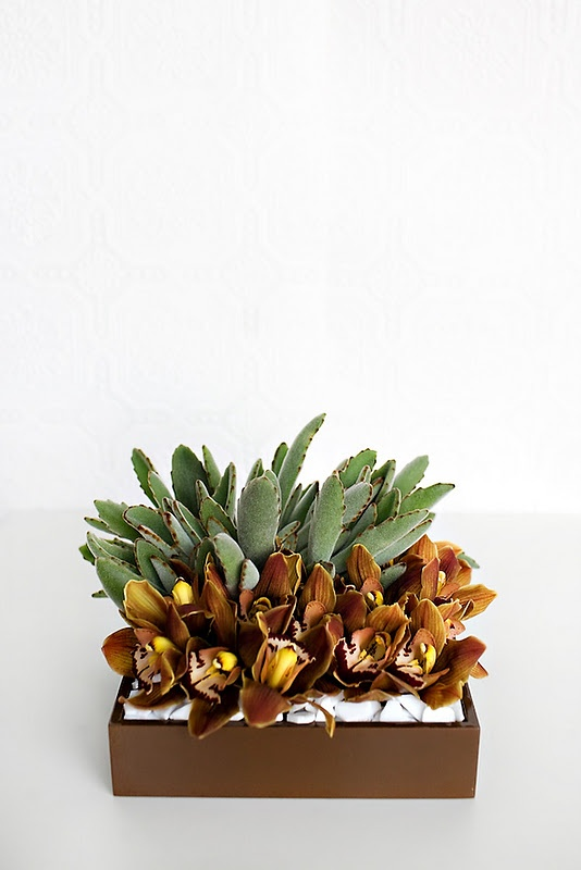 Clean & Modern with succulents and chocolate cymbidium orchids.