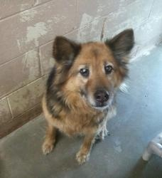 OHIO ~ meet #2 Urgent! ~ an #adoptable #Shepherd #Dog in Carrollton. ~~ Available for a limited time from the CARROLL COUNTY DOG POUND  2185 Kensington Rd. NE, Route 9, Carrollton, Ohio 44615, PH 330-627-4244 ~ mailto:storm6916@.... Located southeast of the Akron/Canton area. The pound is open Monday-Friday, 7-4, except holidays