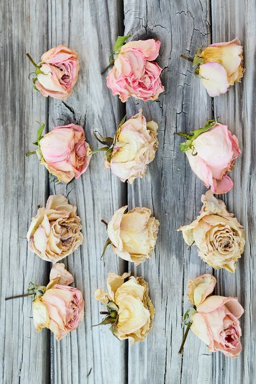 Roses on Wood