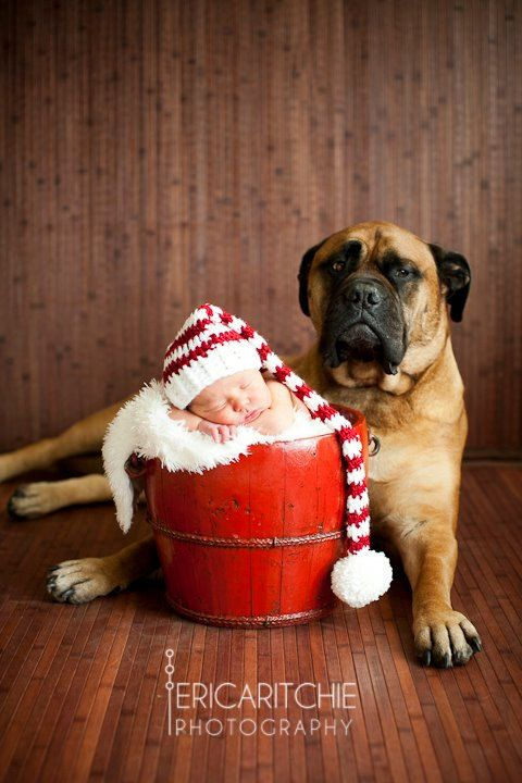 Christmas Hat - Newborn Baby Stocking Hat, Candy Cane Baby Hat, Snow White and Red with Pom Pom. Holiday Photo Shoots or Holiday Cards.. $25.00, via Etsy. Cute small baby giant dog
