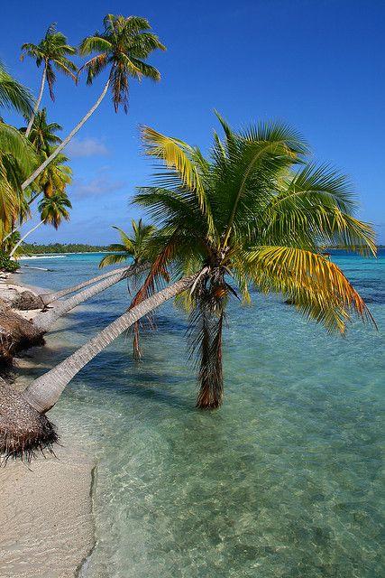 South sea paradise, Palm trees on Tikehau - French Polynesia