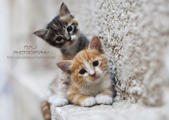 Cute cat photographs