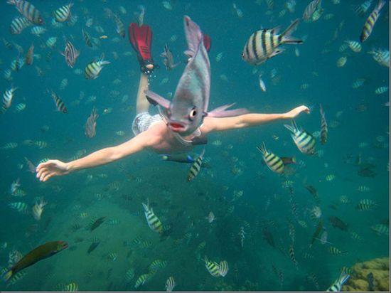 fabulous fish photobomb