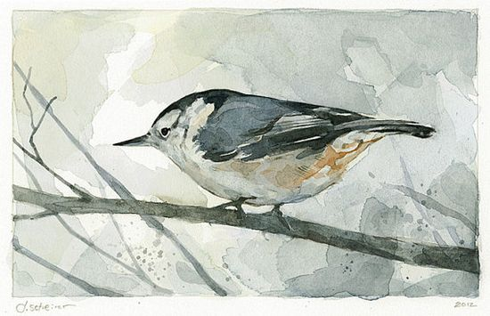 Nuthatch Watercolor Painting Bird Print  limited by studiotuesday, $28.00