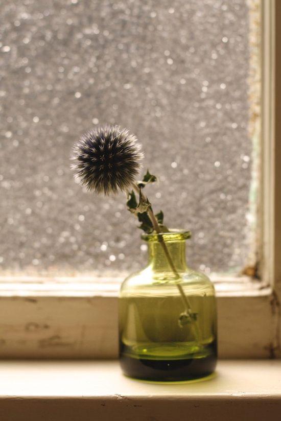 thistle . window