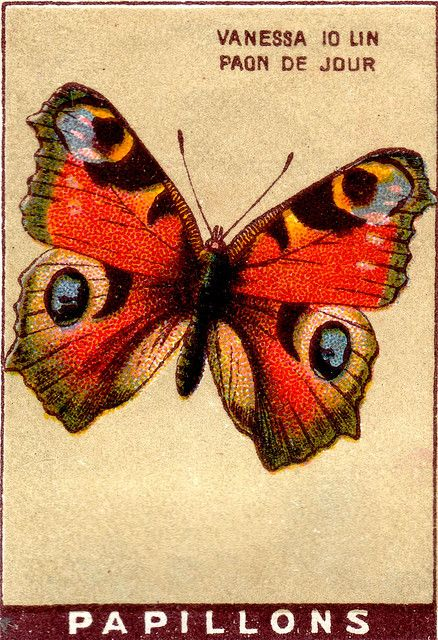 Butterfly Vintage Illustration
