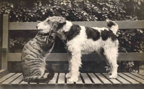 *My favourite dog and cat image...Libby Hall Collection