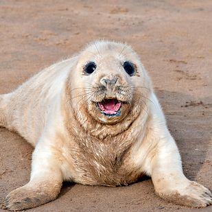 21 Celebrities That Look Like Seal Pups