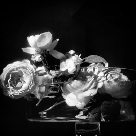 Roses from the weekend. 23rd July 2013. Rose.By Nick Knight