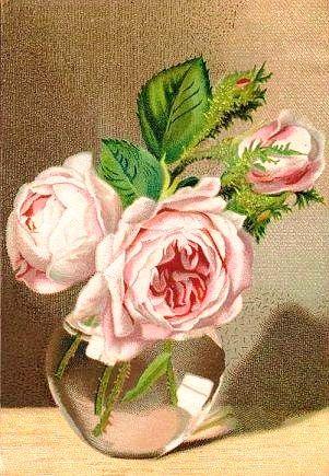 pink roses ephemera