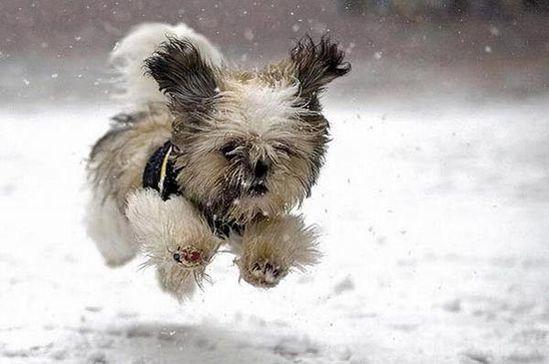 Isn't he cute? #snow #puppylove #cute