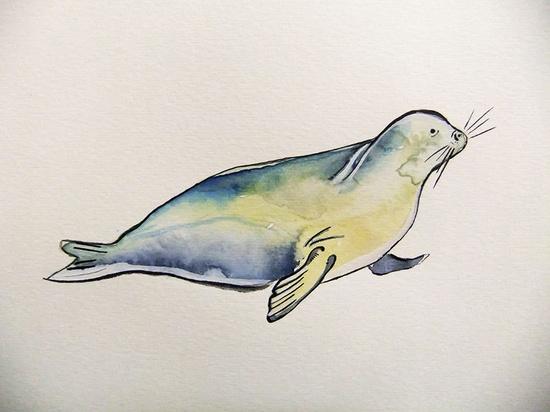 Seal -Original Watercolor Painting