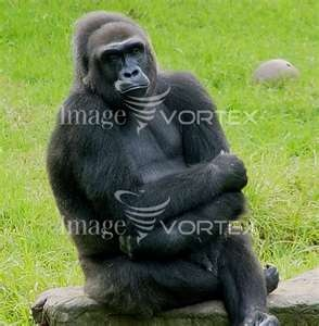 """""""The Thinker""""... different take on it!"""