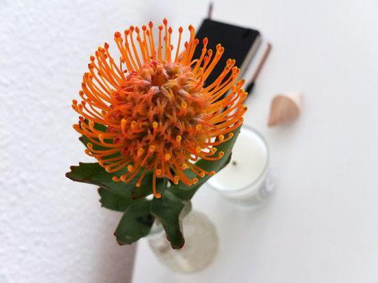KAAM {hand-made}: Monday flowers