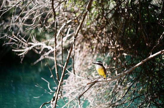 Nature mariana caldas http www flickr com photos marianacaldas