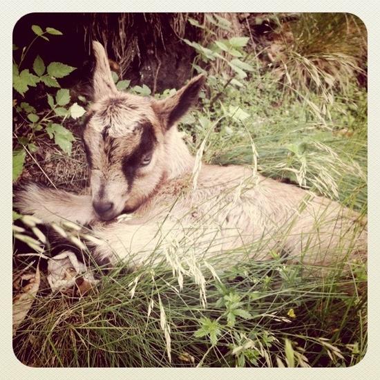So cute #cute #animal