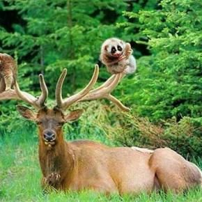 Animals - Pixdaus