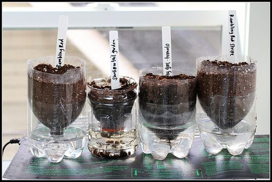 self-watering seed starters made from two liter plastic bottles.