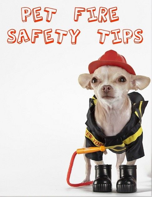 July 15 is National Pet Fire Safety Day. Protect your pets from the threat of fire with these pet safety tips!