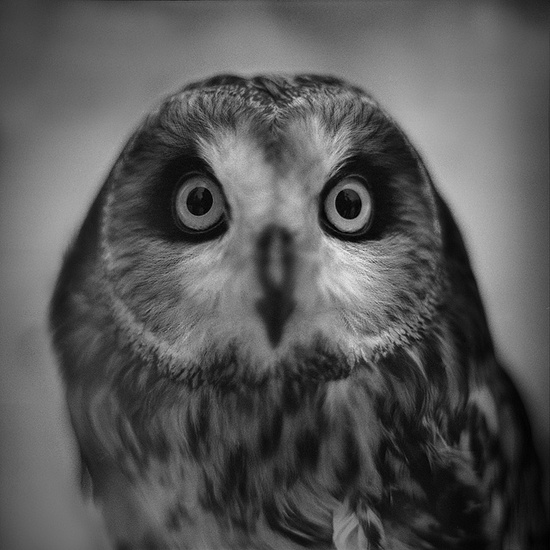{portrait of an owl} photographer developed his own film, which I always admire :)
