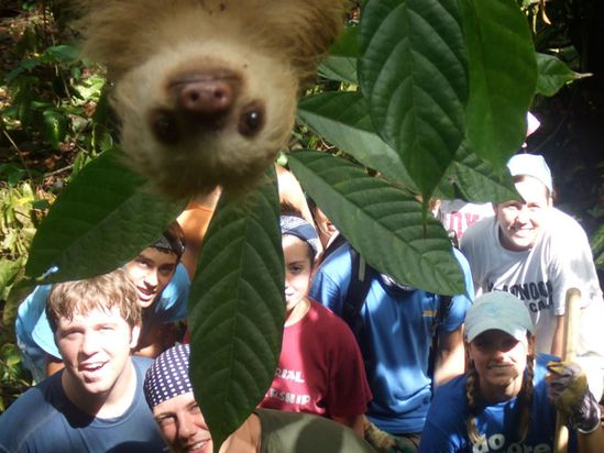 Mischievous sloth photobombs a group of tourists.