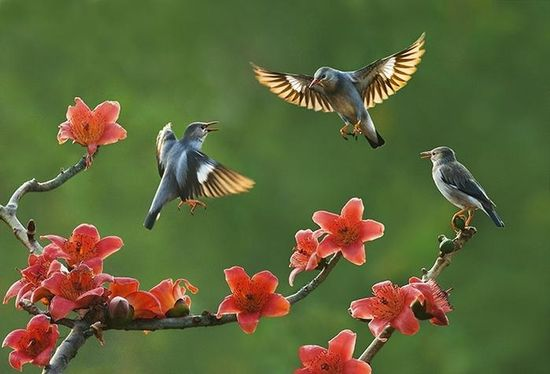 Birds and flowers..