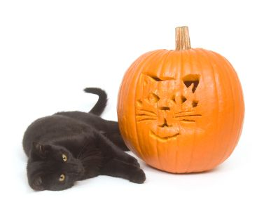 How to harness the power of pumpkin for pets