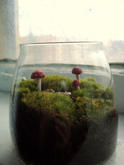 Moss jar love.