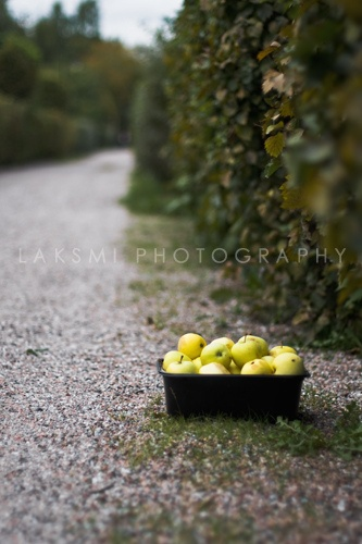 Apples by Laksmi