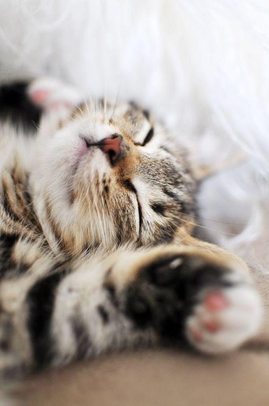 Beauty sleep.