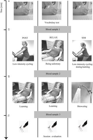 Physical Exercise during Encoding Improves Vocabulary Learning in Young Female Adults: A Neuroendocrinological Study  #PhysEd