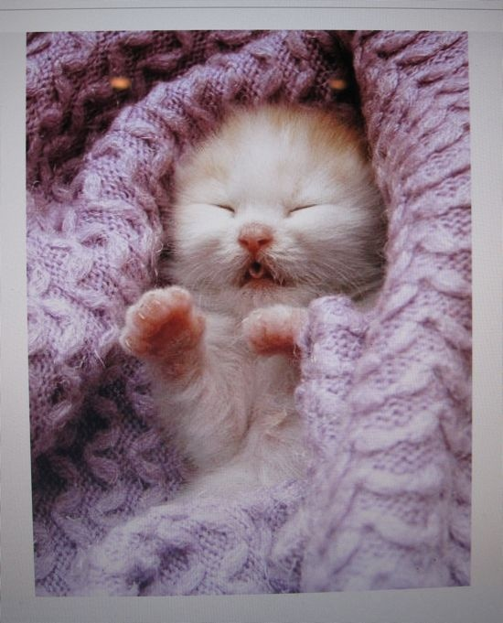 im not a cat person, but this is cute.