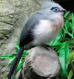 Omg, I love this bird ?