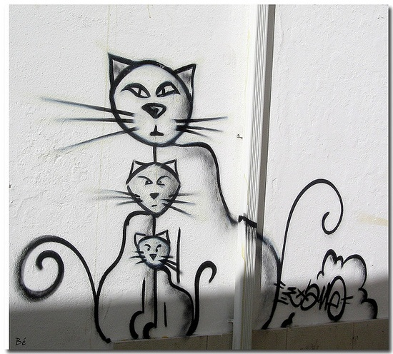 Graffiti. Street art 000 cat