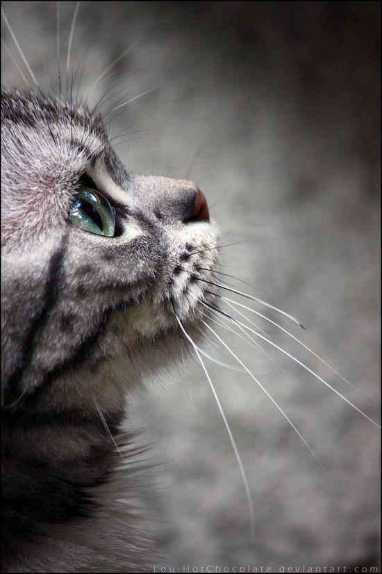:) #Cat