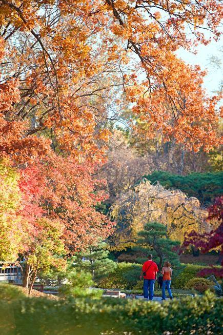 St. Louis: Missouri Botanical Garden.