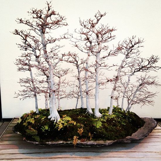 Autumn Bonsai Forest. I love bonsai trees. Please check out my website thanks. www.photopix.co.nz
